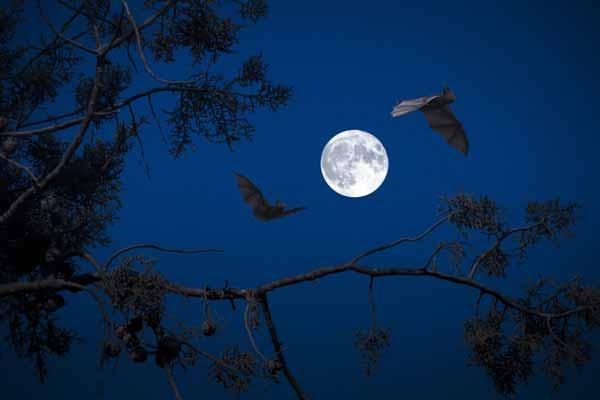 soñar con murcielagos