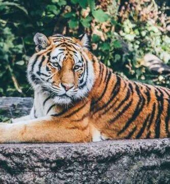 soñar con zoo