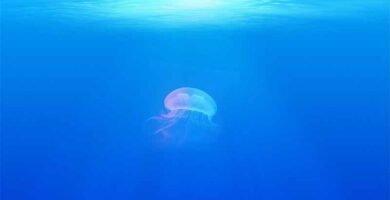 soñar con medusas