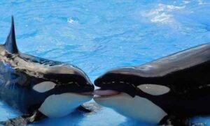soñar con orca
