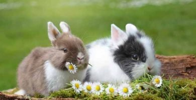 soñar con conejo