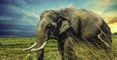 soñar con elefantes